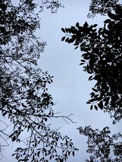 覆う影の写真・画像素材[801963]
