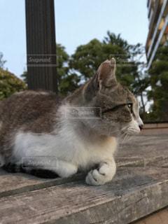 ベンチに座って、野良猫の決めポーズの写真・画像素材[795891]