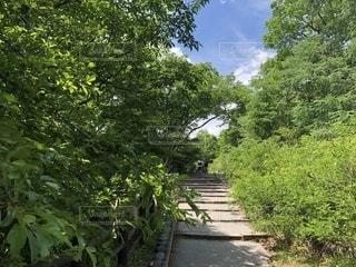 夏 階段の写真・画像素材[1311600]