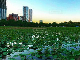 上野公園の写真・画像素材[1311964]