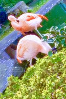 草の上に座っている鳥の写真・画像素材[800556]