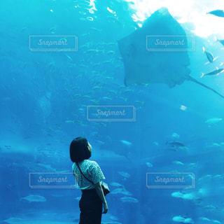 水族館でのんびりの写真・画像素材[976751]