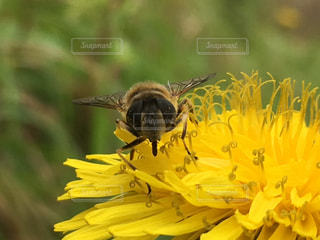 黄色の花の写真・画像素材[796239]