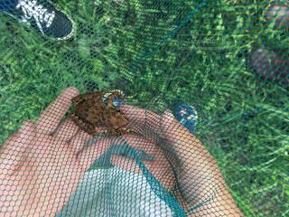 網の中の蛙の写真・画像素材[798321]