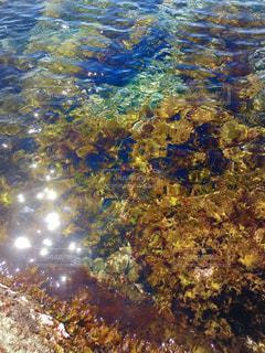 海の海藻の写真・画像素材[2092110]