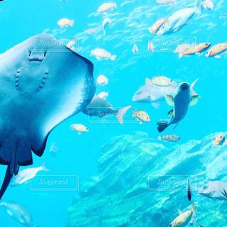 海のなかまの写真・画像素材[1296378]