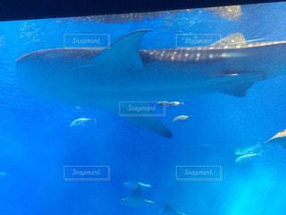 水面下を泳ぐ魚たち - No.796384