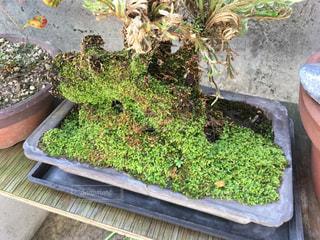 庭園の緑の植物 - No.796749