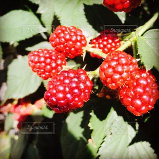 色とりどりの花のグループの写真・画像素材[796976]