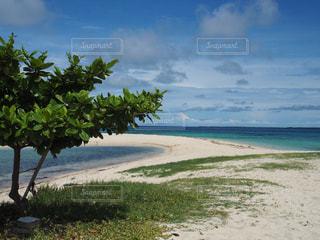セブのビーチの写真・画像素材[752836]
