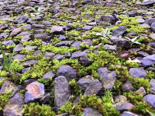 苔と岩のハーモニー - No.800333
