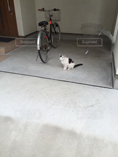 遠くの猫の写真・画像素材[797597]