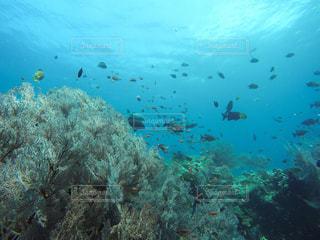 カモメの群れが水中の写真・画像素材[797671]