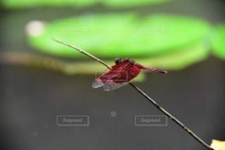 枝の昆虫の写真・画像素材[797674]