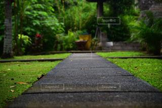公園のベンチの写真・画像素材[797675]