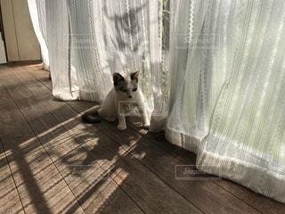 日向に座る猫 - No.948769