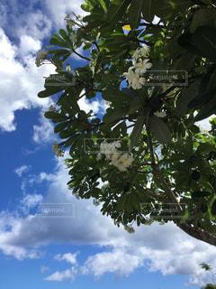大きな木 - No.798711