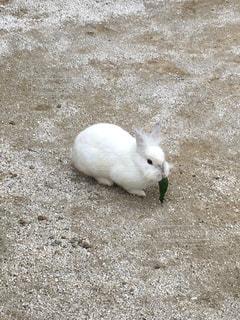 茶色と白の動物の写真・画像素材[798722]