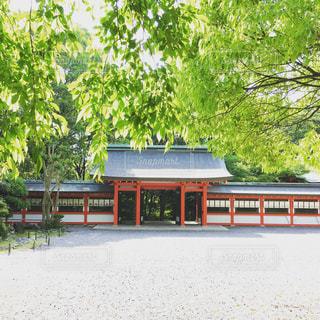近江神宮の写真・画像素材[798260]