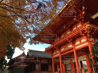 近江神宮楼門の紅葉の写真・画像素材[798775]