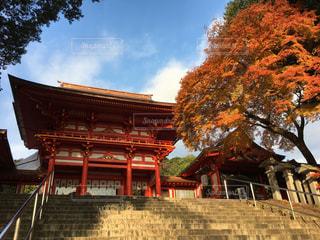 近江神宮楼門の紅葉の写真・画像素材[798778]