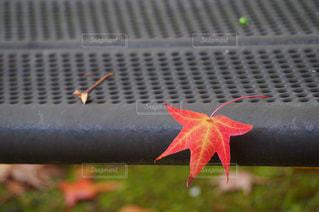 ベンチに落ちた葉の写真・画像素材[805554]