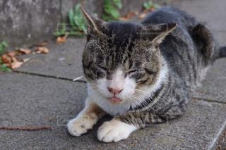 のんびり猫の写真・画像素材[798587]