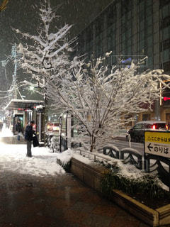 京都の雪夜の写真・画像素材[798627]