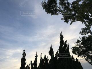 夕空の写真・画像素材[800571]