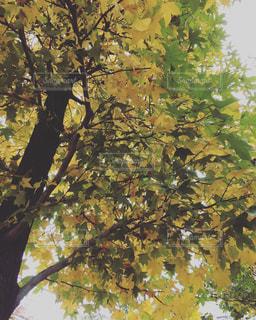 お散歩道の木の写真・画像素材[799504]