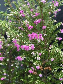 植物にピンクの花の写真・画像素材[802353]