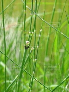 お散歩で見つけたツンツンの草の写真・画像素材[4910950]