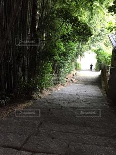 神社からの帰り道の写真・画像素材[800162]