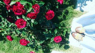 薔薇園にて - No.799604