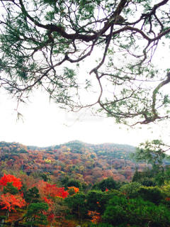 背景の山と木の写真・画像素材[1020639]