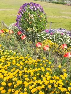花々の写真・画像素材[1118643]