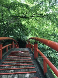 山の新緑に赤い橋の写真・画像素材[1241394]