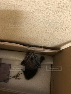 猫の写真・画像素材[800052]