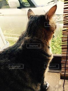 外を眺める猫 - No.801430