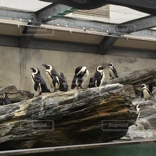 ペンギン岩の写真・画像素材[805663]