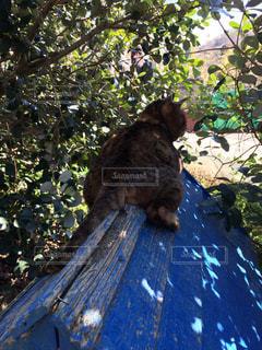 木の枝の上に座って犬の写真・画像素材[800833]