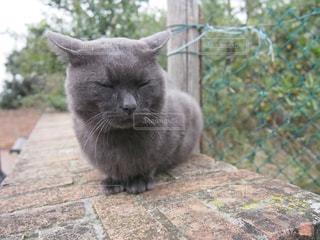 イタリアの島に住む野良猫の写真・画像素材[800925]