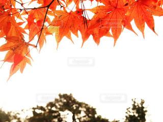 日光の紅葉の写真・画像素材[802554]