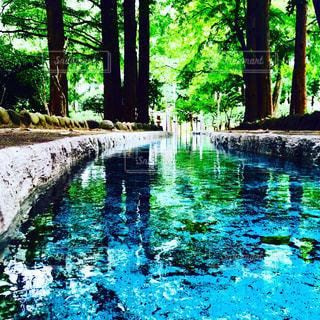 木々 に囲まれた水の体の写真・画像素材[805760]