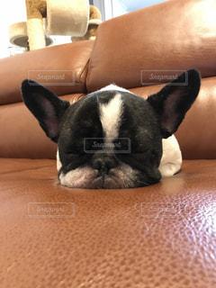 ソファで寝るの写真・画像素材[801169]