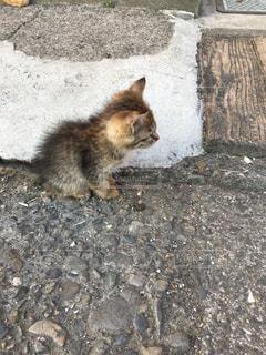 岩の上に座っている猫の写真・画像素材[801319]