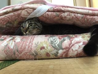 昼寝ネコの写真・画像素材[801472]