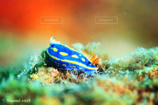 近くに魚のアップの写真・画像素材[1459746]