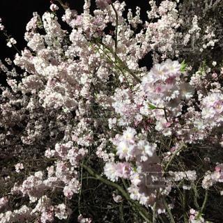 植物にピンクの花の写真・画像素材[801992]