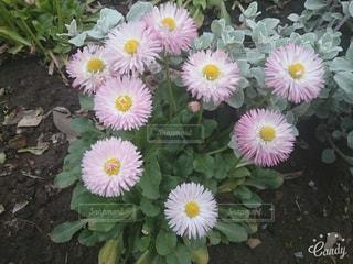 黄色の花の束の写真・画像素材[802080]